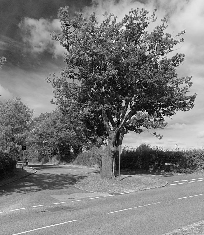 Jubilee Oak  Woughton on the Green