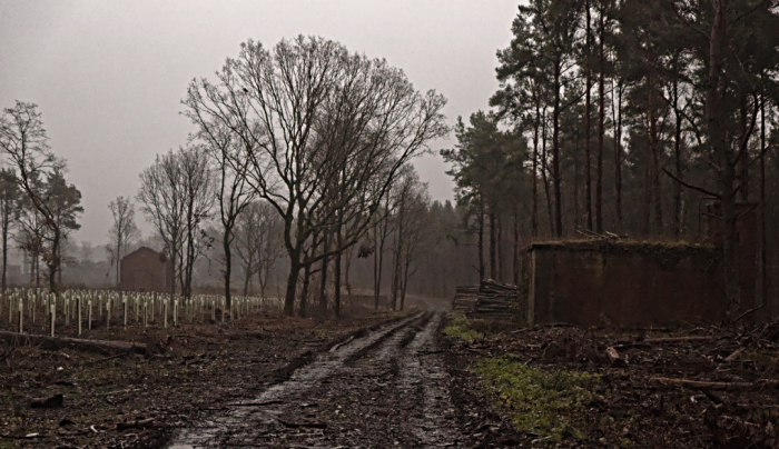 Tingewick Woods
