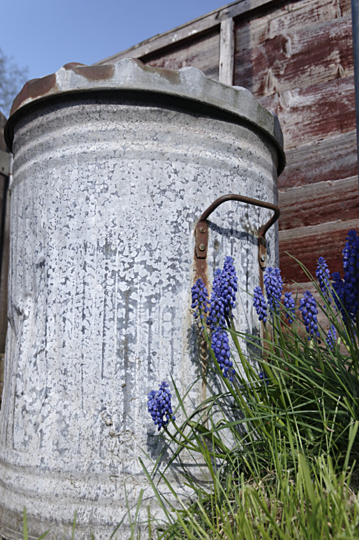 Metal dustbin  grape hyacinths