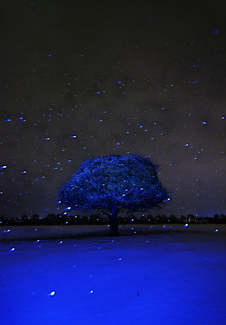 Snowing  and tree