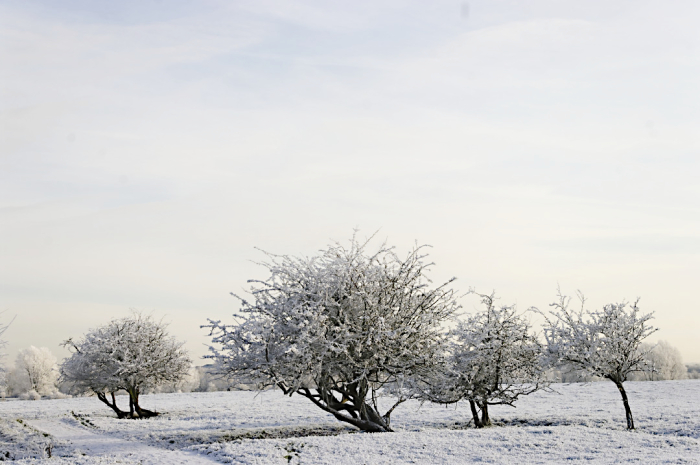 Winter trees  Ouzel valley