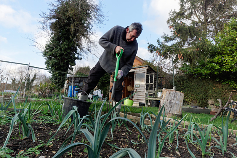 Weeding on the allotment