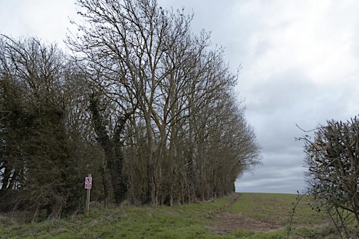 Emberton railway cutting