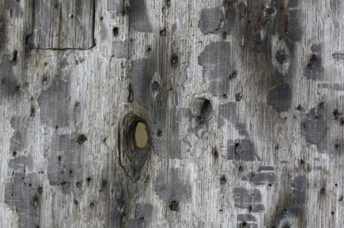 Musket ball hole  Hillesden