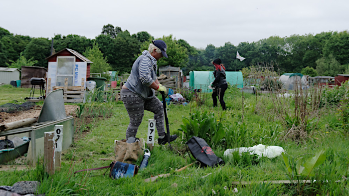 Covid and allotment