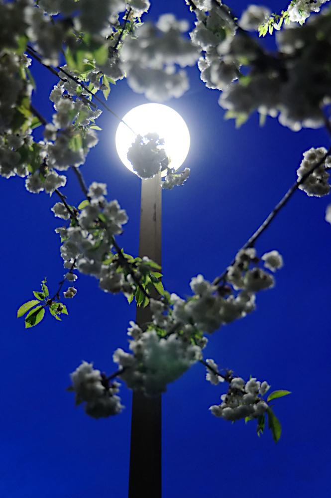Milton Keynes estate globe lighting